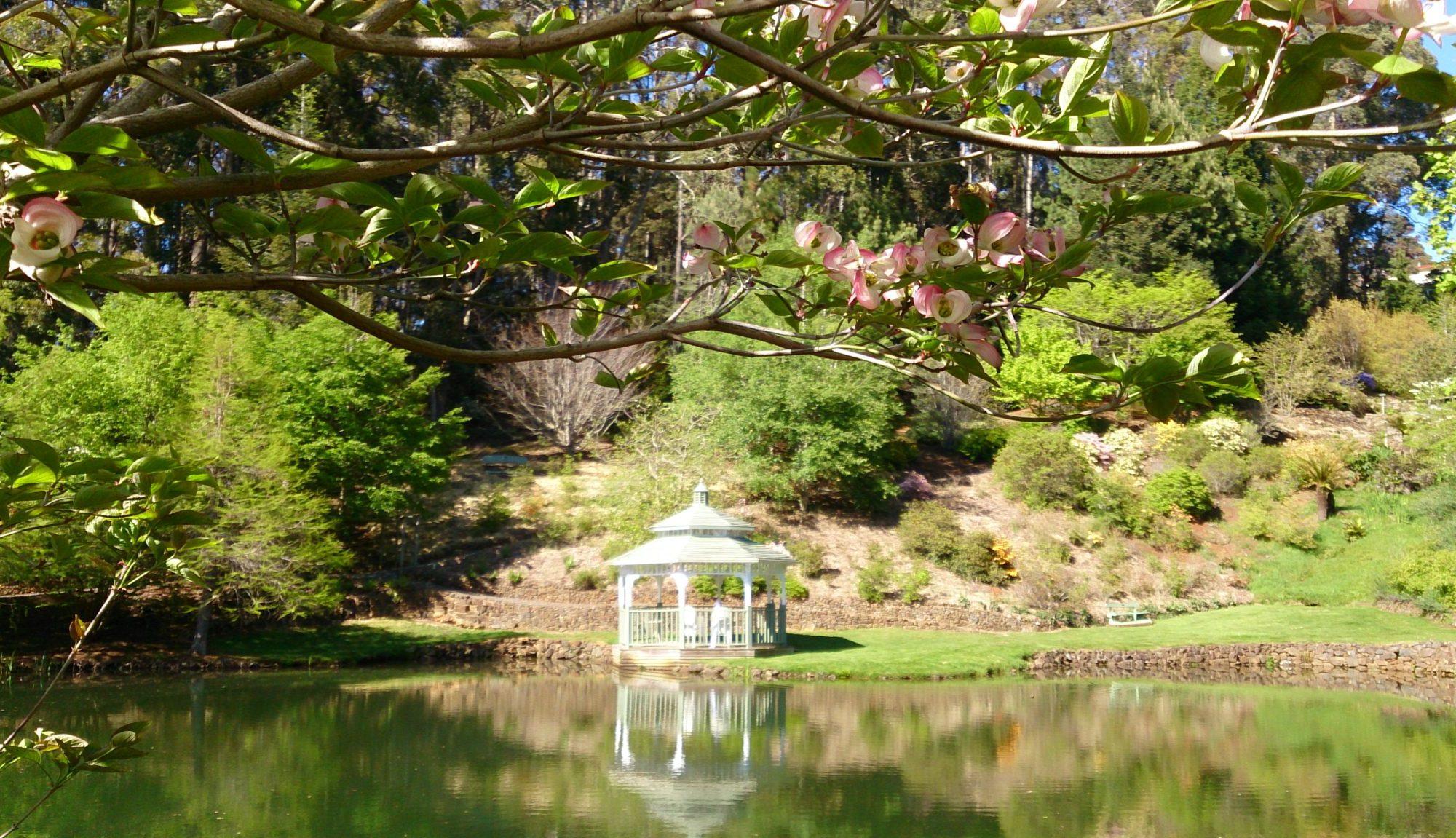 Traversing Emu Valley Rhododendron Garden