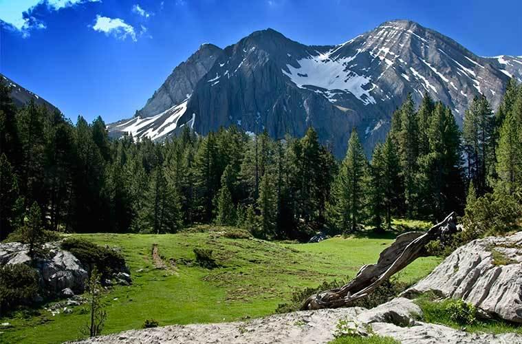 Flora y fauna de los Pirineos. El llano de la Basa de la Mora / Foto: Kom bo (Flickr)