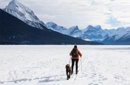 Consejos para hacer senderismo con perros