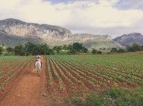 Horseback Riding in Viñales