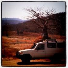 5 - baobab valley