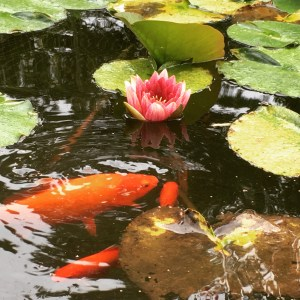 goldfish pond