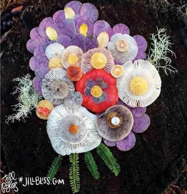 mushrooms nature medley jill bliss 10 - Wow...Indahnya Jamur Liar Ini Bikin Takjub Bagi Yang Melihatnya