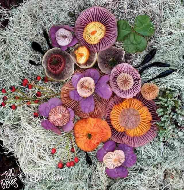 mushrooms nature medley jill bliss 2 - Wow...Indahnya Jamur Liar Ini Bikin Takjub Bagi Yang Melihatnya