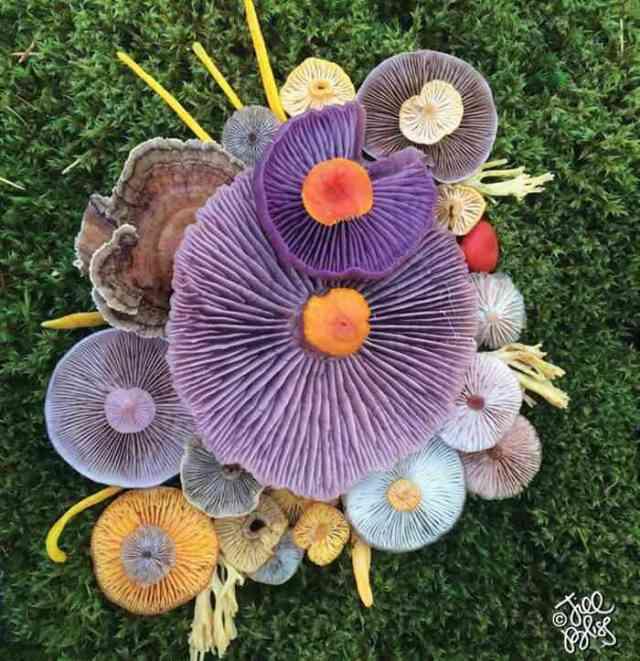 mushrooms nature medley jill bliss 8 - Wow...Indahnya Jamur Liar Ini Bikin Takjub Bagi Yang Melihatnya
