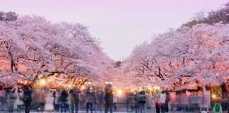 上野公園春天