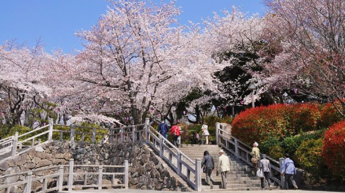 飛鳥山公園Asukayama Park