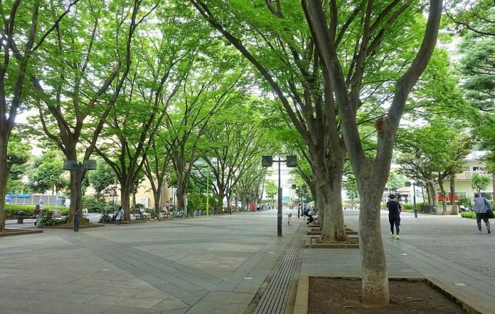 埼玉 櫸木廣場