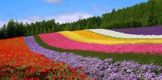 cropped 富田農場