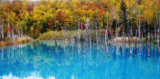 cropped 青池,秋。