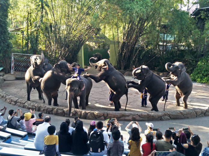 Safari World大象表演