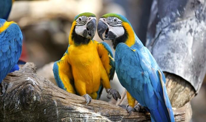 Safari World鸚鵡三