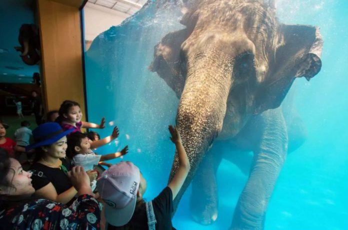 芭達雅最大野生動物園