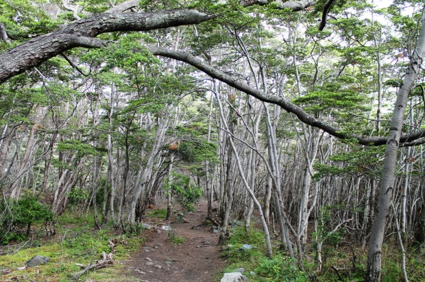 forest glacier grey