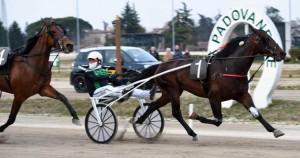 Re Italino Ur med Enrico Bellei vandt Le Padovanelle. Foto Gerard Forni