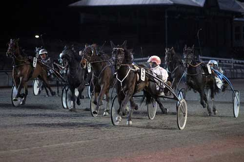 Rapide du Pommeau vandt let Taroks Mindeløb og Flemming Jensen havde tid til at se, hvor konkurrenterne blev af. Foto Martin Timm Holmsyav