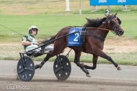 Wild Honey med Yannick Gingras  ved sejren  i Hambletonian Oaks. Foto Michael Lisa.