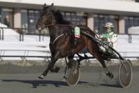 Copenhagen Cup-vinderen Orali er bkandt de hingste, der fremstilles for DTCs Avlskommision i næste uge