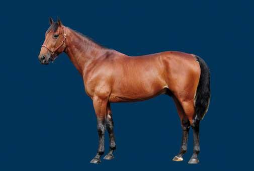 Quaker Jet . fader til Stald Ritas to nye heste.