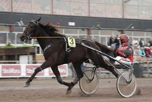 Run Ceasar Run med Michael Lønborg vandt for anden gang i træk. Foto Halmstad Travet