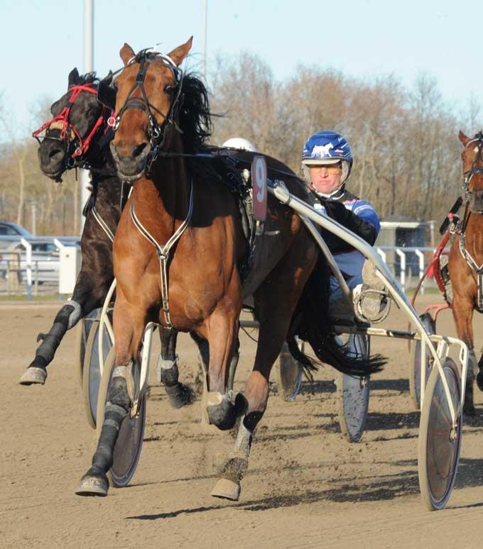 Anders Pedersen var i hopla i aftes og vandt tre sejre - her med Tonght la Marc. Foto Ole Hindby