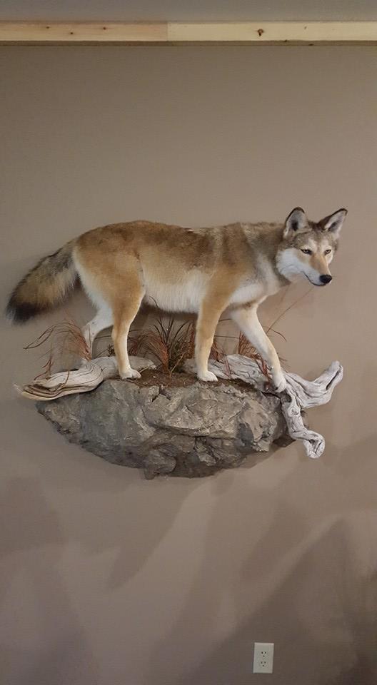 Small Mammals Travs Taxidermy