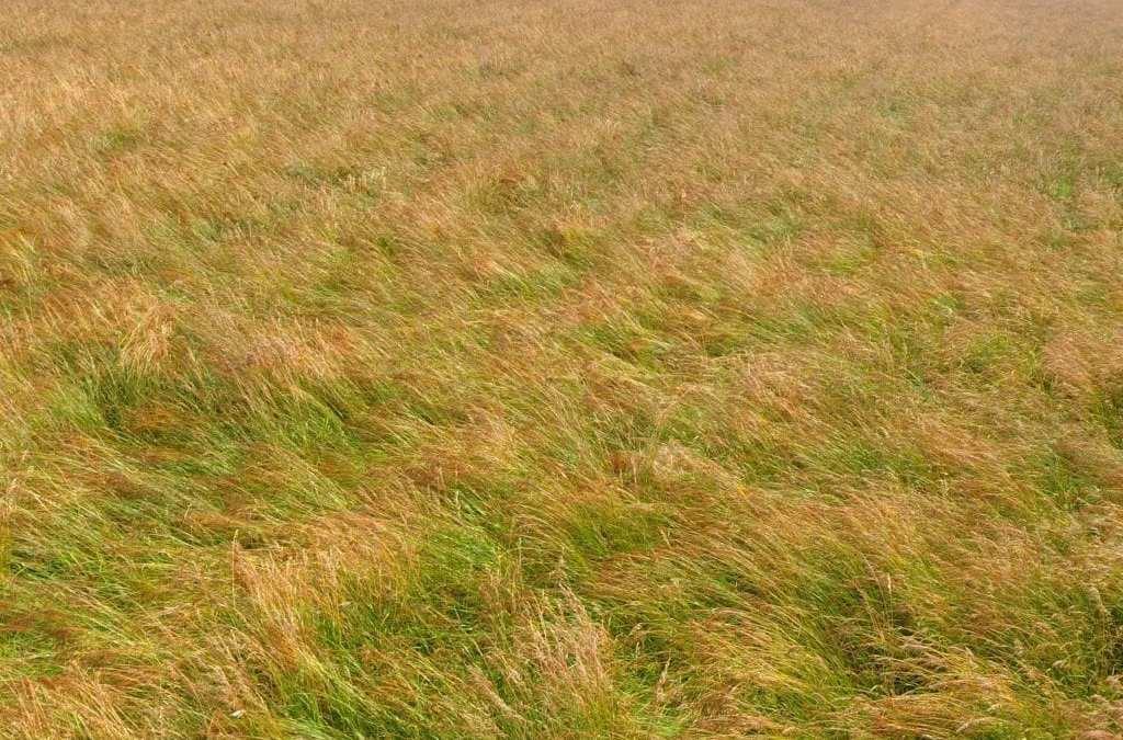 Grasses & Legumes