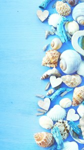 Shells and Hearts Blue Background Love Full HD Xiomi Wallpapers