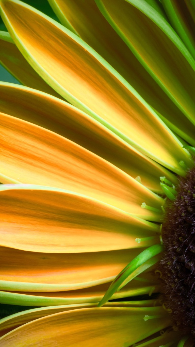 Yellow Sunflower iPhone FHD Wallpapers Download Free