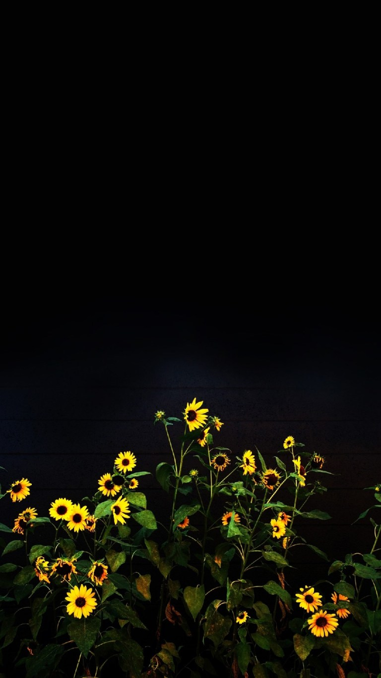 Sunflower Dark Black Oled iPhone HD Wallpapers