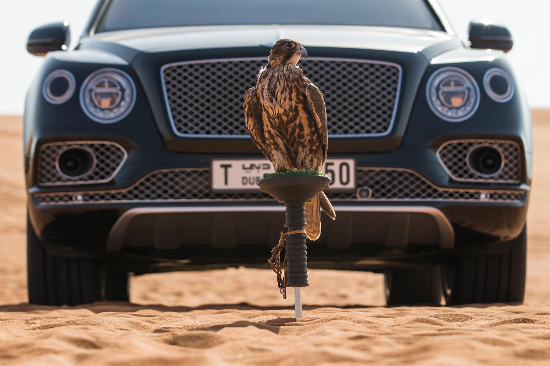 Unterwegs im Wüstenschiff mit Luxus-Vogelnest