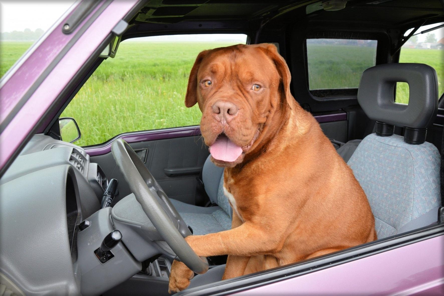 30 Prozent aller Autofahrer befördern ihre Vierbeiner in einer befestigten Transportbox im Kofferraum