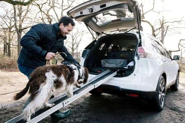 Experten kennen Tricks für den tierischen Urlaub