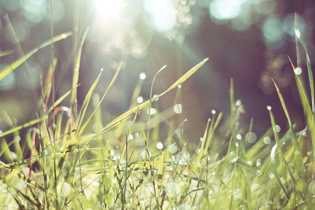 Gravity grass