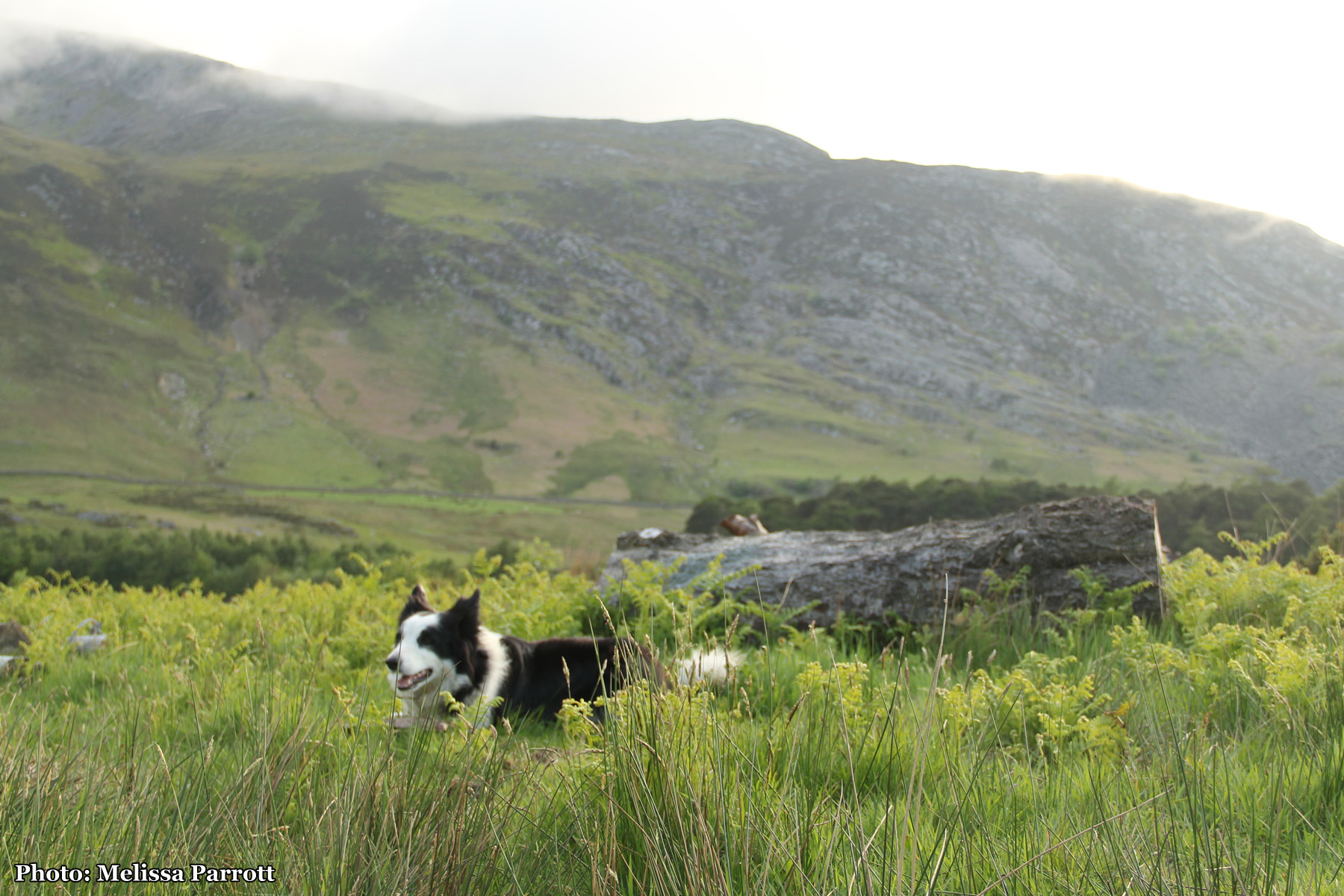 I am very happy here, so is Floss.  What a life!