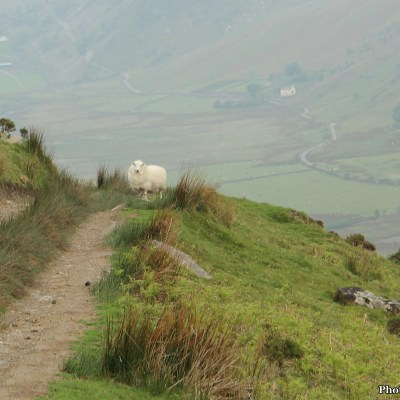 Many sheep were perturbed by my presence and shuffled frantically off the path as I approached.