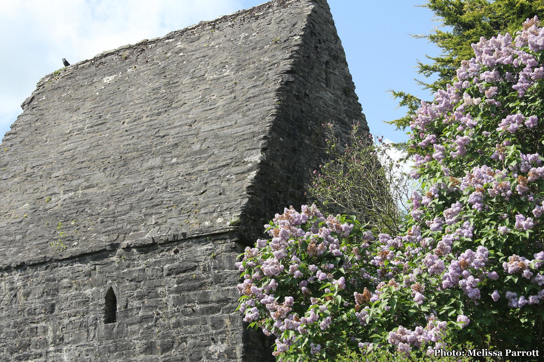 Vikings, Rebels, Saints and Scribes: The Heritage Town of Kells