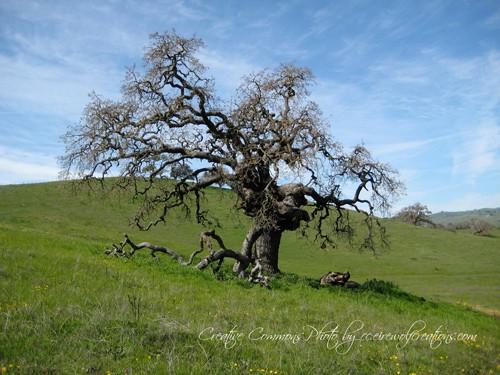 Beautiful tree on a hillside