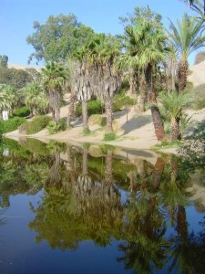 The reflection of the palm trees in the oasis of Huacachina is so beautiful!