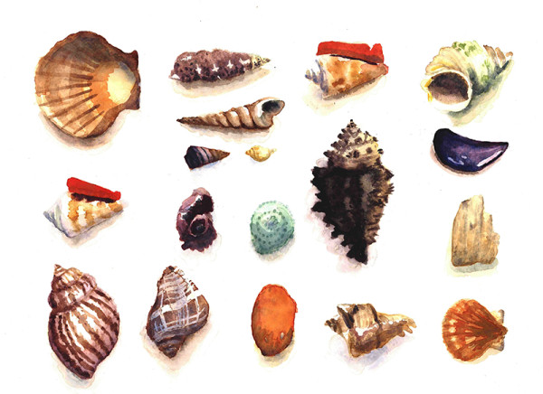 Seashells #3, watercolor on paper 2015