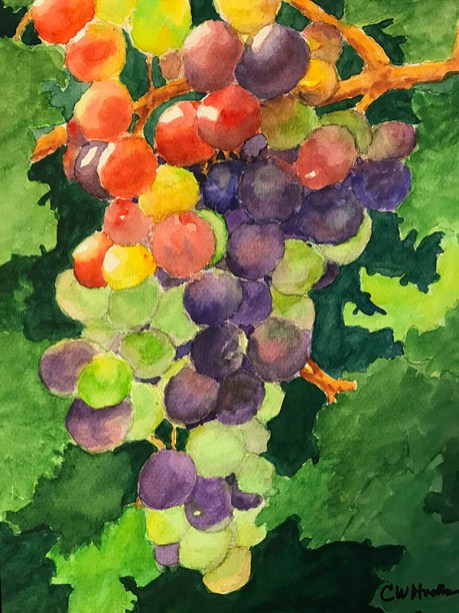 Grape Diversity