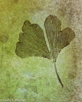 Marlow nature_prints2