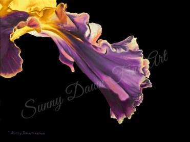 "Iris I, oil on canvas, 12""x16"""