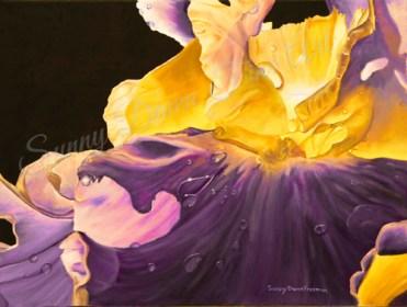 """Iris II, oil on canvas, 12""""x16"""""""