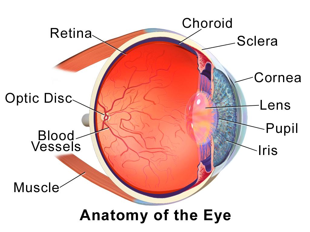 Intraocular Eye Melanoma