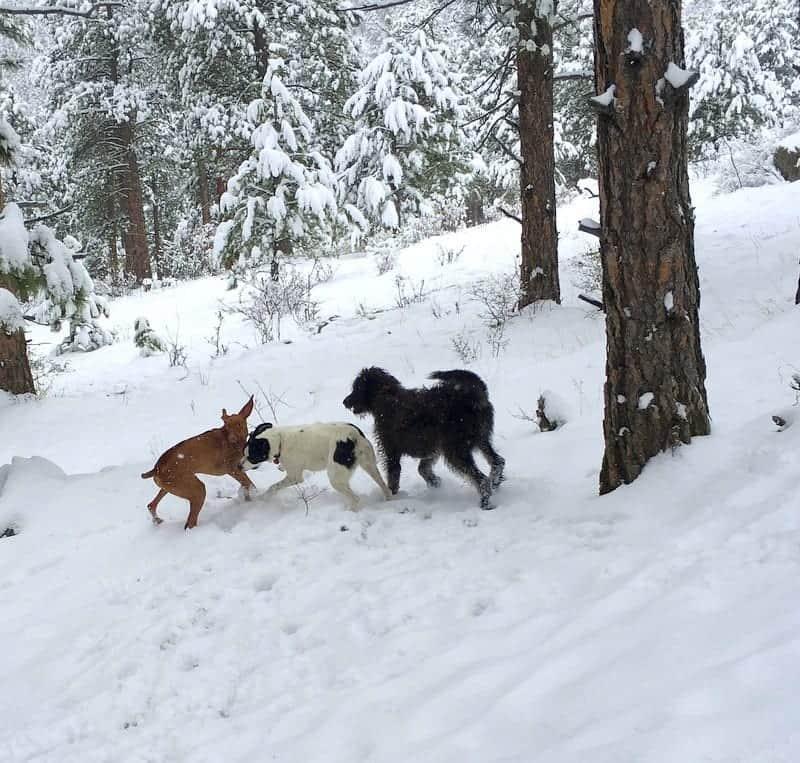Evergreen Dog Park Denver