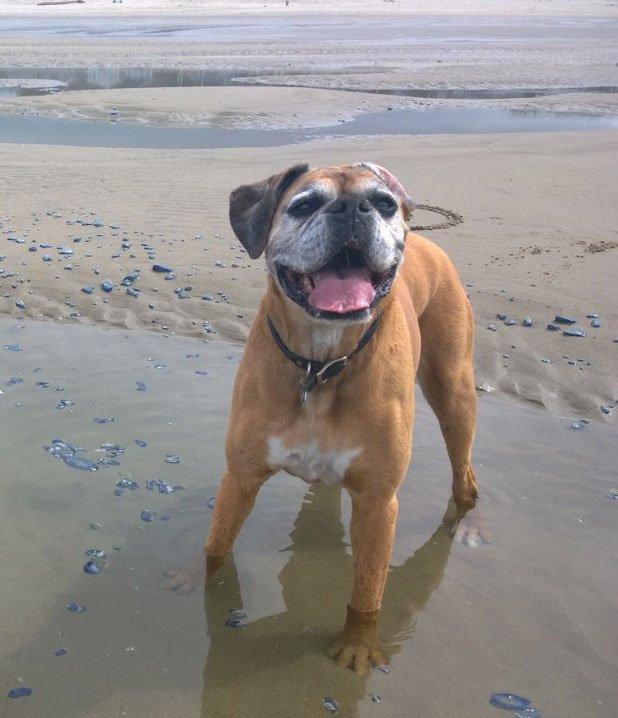 Lucie Bea, canine customer