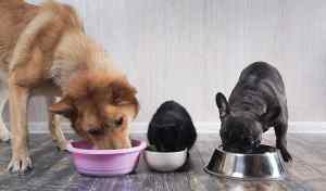 two dogs and one cat eating pet food from their bowls