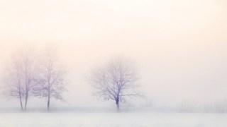 生命の樹 セフィロトの樹 treeoflife treeofsmile 生命の樹カウンセリング Tree of Life Counseling 生命の樹リーディング 冬