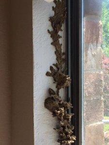Subterranean Termite Control Mission Viejo